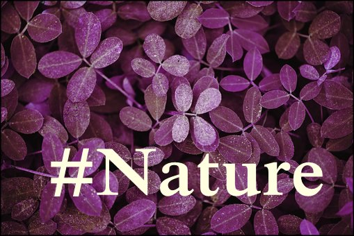 Nature hashtags populares